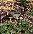 Birds MG 9156MOD (6477809171).jpg