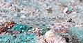 Blacktip sandgoby (Fusigobius melacron) (48852985091) (cropped).jpg