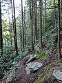 Blackwater Falls State Park WV 03.jpg