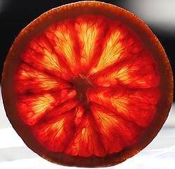 Blood Orange 2.jpg