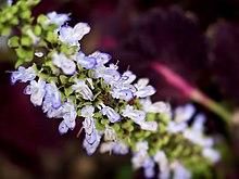 Blue purple flower.jpg