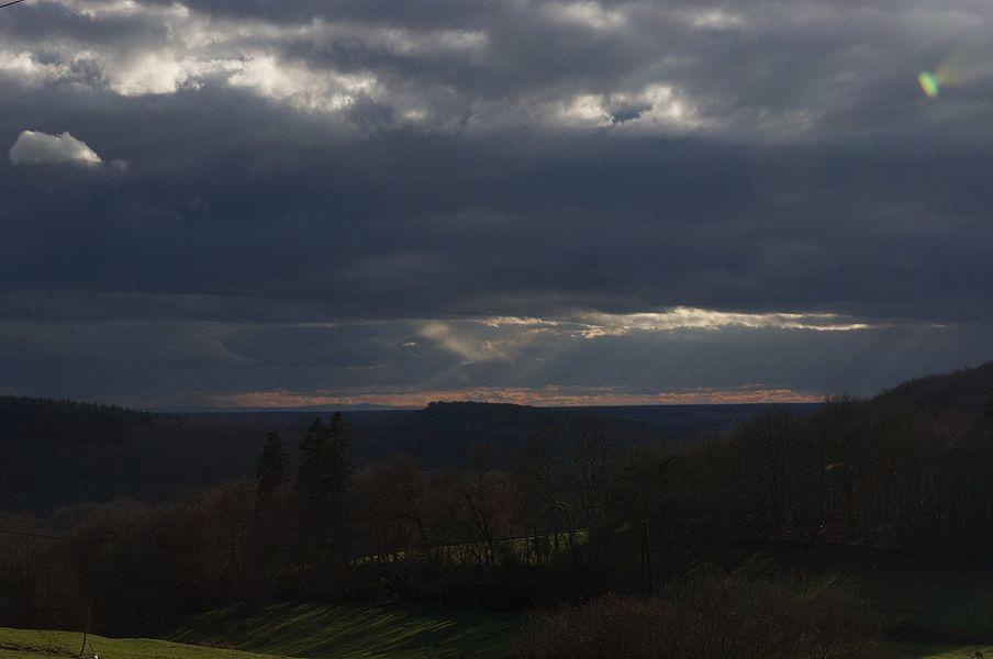 "Landscape of the ""bois robinet"""