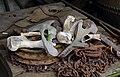 Bones and all sorts of debris J1.jpg