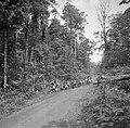 Boslandcreolen slepen in het Marowijnegebied de gekapte bomen uit het oerwoud, Bestanddeelnr 252-6823.jpg