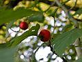Botanični vrt (3990151117).jpg