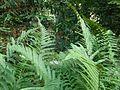 Botanični vrt (3990159199).jpg