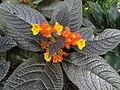 Botanical Garden of Peradeniya 90.JPG