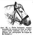 Boulonnais1865.jpg