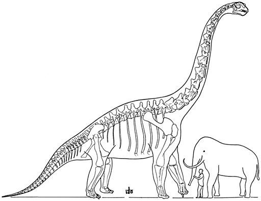 Brachiosaurus composite Matthew 1915