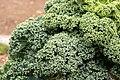 Brassica oleracea var. acephala 03.jpg