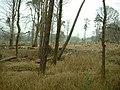 Breast Wood, Capernwray - geograph.org.uk - 117300.jpg