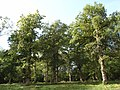 Briary Wood - geograph.org.uk - 257552.jpg