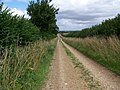 Bridleway, King Down - geograph.org.uk - 1438390.jpg