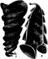 Britannica Shark Egg-shell.png