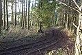 Broadway Wood - geograph.org.uk - 1639331.jpg