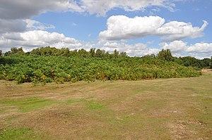Prehistoric Norfolk - The Long Barrow at Broome Heath