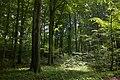 Buchenwald D HeiligeHallen CCby conradamber at.jpg