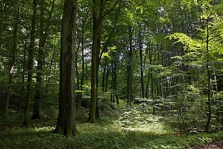 vitalität bäume roloff