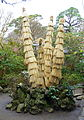 Bundle up - Hokai-ji - Kamakura, Kanagawa, Japan - DSC08449.JPG