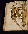 Códice Pomar (Atlas de historia natural) que perteneció a Felipe II de España.jpg