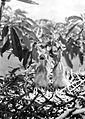 COLLECTIE TROPENMUSEUM Twee jongen op het nest in schrikhouding TMnr 10006498.jpg