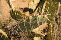 Cactus - Close Up (6843265382).jpg