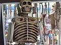 Calaveras de día de muertos en Aguascalientes 2015 8.JPG