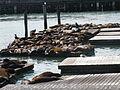 California Sea Lions IMG 4558.JPG