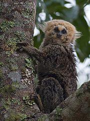 lista de mamíferos do brasil wikipédia a enciclopédia livre