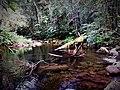 Caminata guiada a través de selva y ríos.jpg