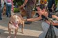 Caminata por los perros y animales Maracaibo 2012 (37).jpg