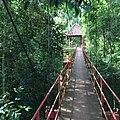 Canopy walkway at Peninsular Botanical Garden (Thung Khai),Trang - panoramio.jpg