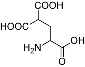 Carboxylation - Carboxyglutamic acid