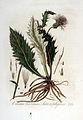 Carduus heterophyllus — Flora Batava — Volume v3.jpg
