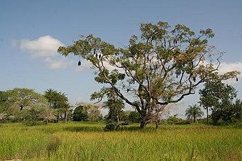 Landscape of Casamance Region, southern Senegal