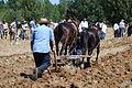Castrillo de Villavega Festival of La Trilla Plowing 002.jpg