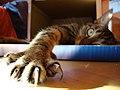 Cat Claws (149400819).jpeg