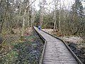 Catwalk in Bolam Lake Country Park - geograph.org.uk - 1172065.jpg