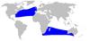 Cetacea range map Trues Beaked Whale
