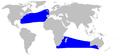 Cetacea range map Trues Beaked Whale.png