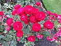 Christchurch Botanic Gardens 09.JPG