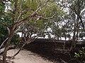 Clarence Estuary Nature Reserve - panoramio (4).jpg