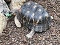 Cleveland Botanical Garden turtle.jpg