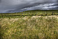 Cliffs of moher - grass and storm (7986662053).jpg