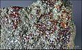 ClinochloreEtGrenatItaliePreovenanceAlaRefMGL35323 MuséumHistoireNaturelleLille GLAM2016 PhotoLamiot 22.jpg