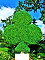 Clover-shaped bush at the Casino of Charlevoix - panoramio.jpg