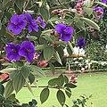 Cluster of purple.jpg