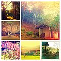 Collage photos in the countryside of Brazil 2012.jpg