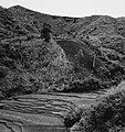 Collectie NMvWereldculturen, TM-20001621, Negatief- 'Landschap met rijstvelden', fotograaf Boy Lawson, 1971.jpg