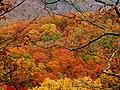 Colors of Autumn (7361894146).jpg